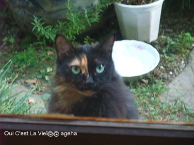 外猫クロちゃん。2010.11