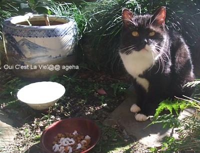 外猫パンダ。2010.11チクワ好き。