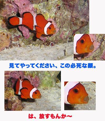 えさくまコピー.jpg