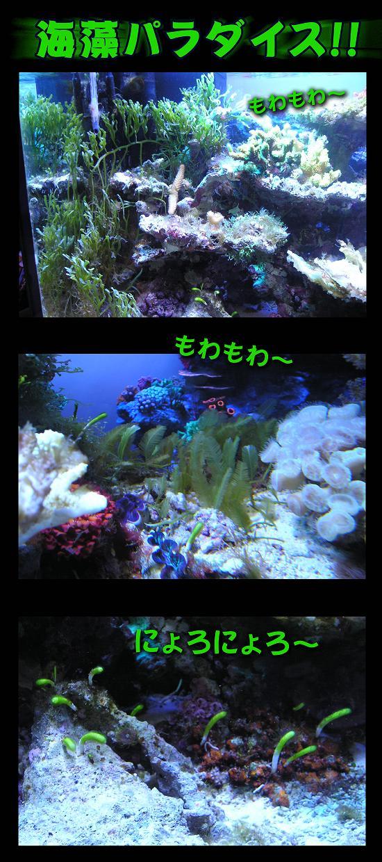 海藻11.jpg