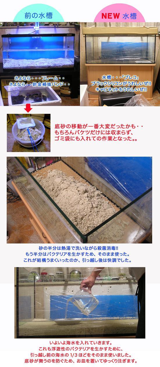 ひっこし2のコピー.jpg