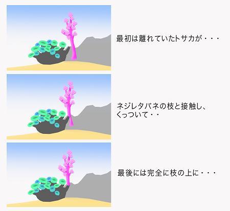 とさのコピー.jpg