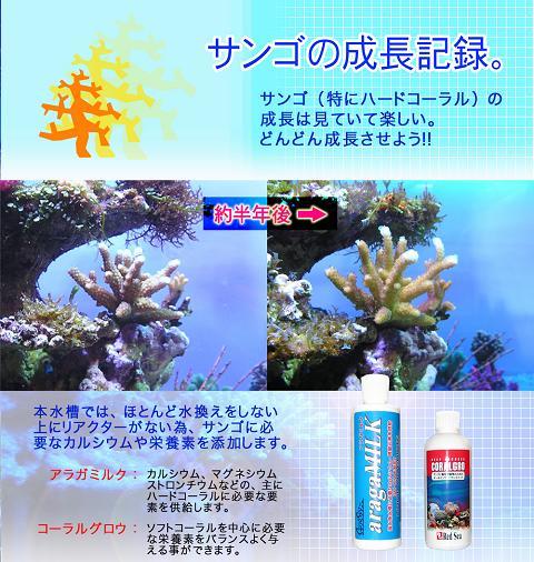 サンゴ成長1.jpg