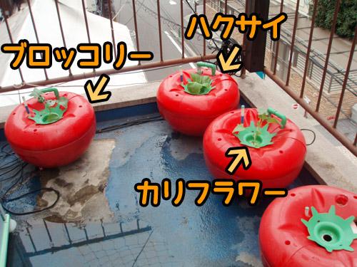 ハイポニカ栽培(水耕栽培)