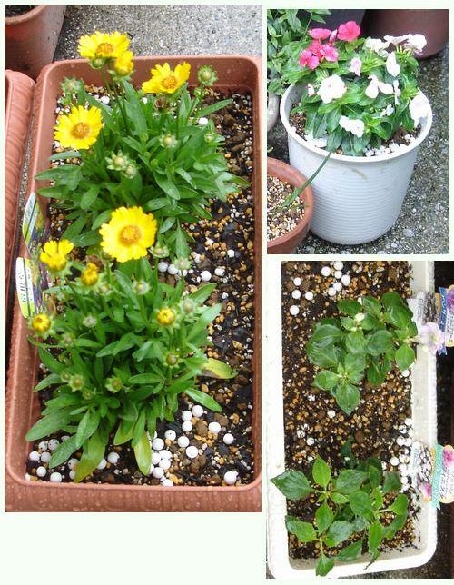 110602-購入した花々