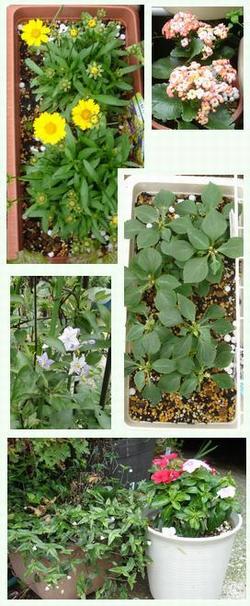 110612-庭の花-1