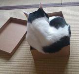 箱入り3.jpg