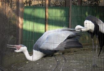 上野動物園・13