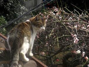 猫の梅見・2