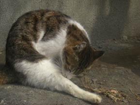 猫の梅見・7