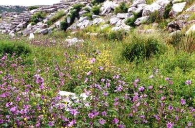 ペルゲ競技場に咲く花