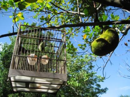 ジャックと鳥籠