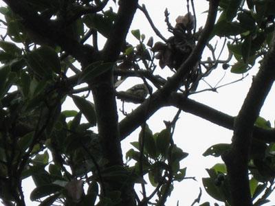 きつつき系の鳥さん