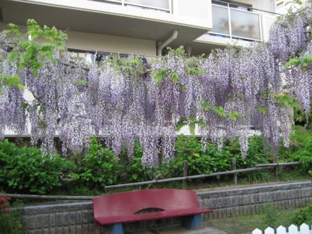 ☆藤の花☆