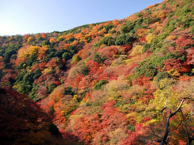 箕面公園紅葉