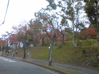 青山公園側道