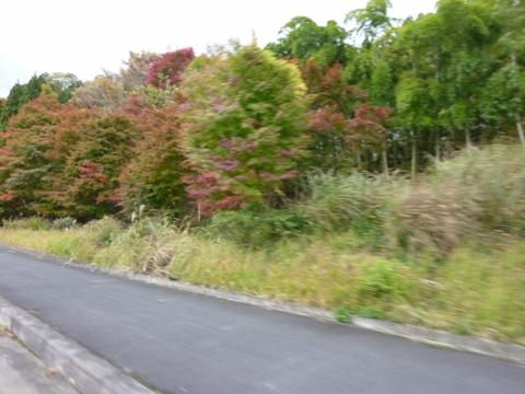 2009.11.2.12.05.JPG