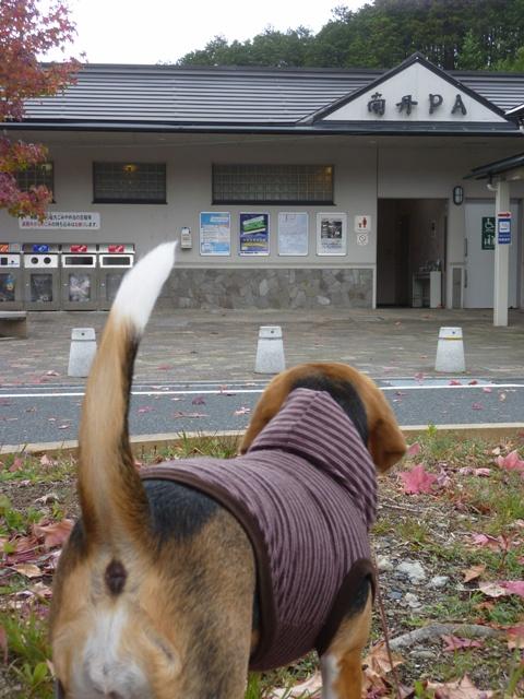 2009.11.2.14.04.JPG