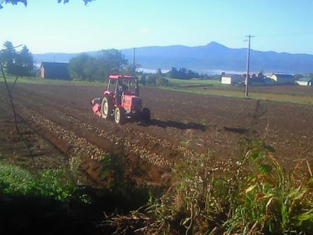 ジャガイモ収穫中 家の前の畑だよ