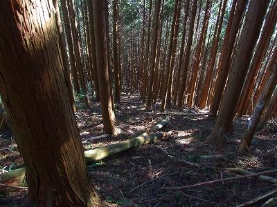 大山→水見色峠間の急坂