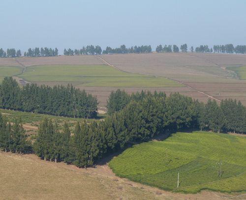 南アフリカ茶園1.JPG