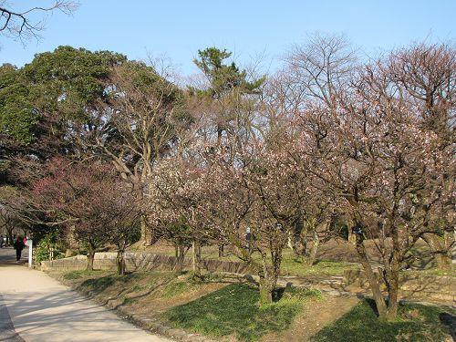 高岡古城公園の梅園