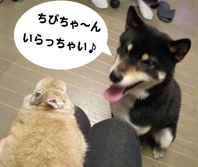 いらっしゃい~(ひじき)
