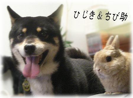 ひじき&ちびちゃん