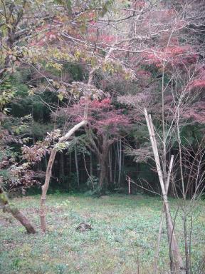鎌倉佐助の庭です1