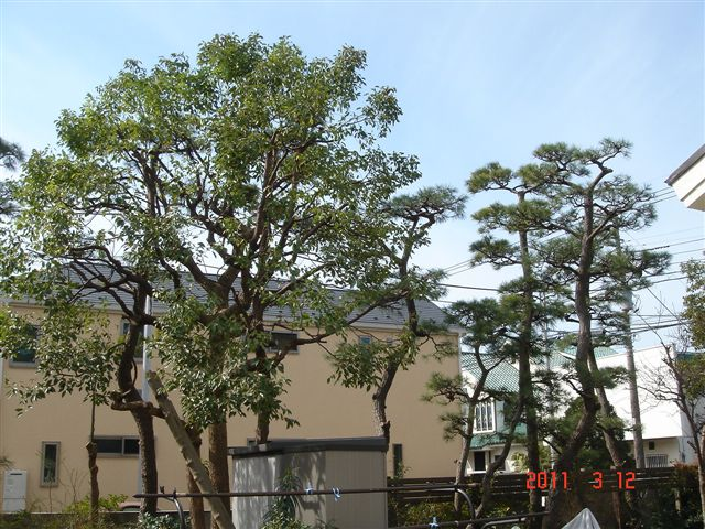 松と楠の切りすかし1.JPG