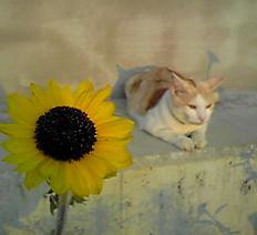 向日葵のそばで眺める