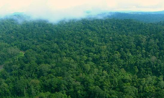 ボルネオの森.jpg