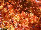 高尾山の紅葉.jpg