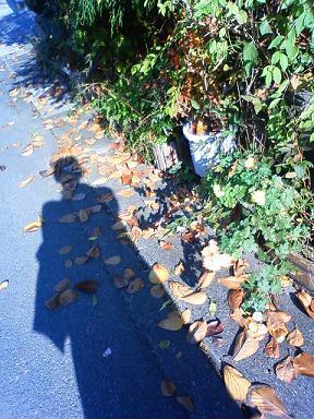 落ち葉掃きの季節到来