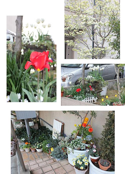 2011春花その2