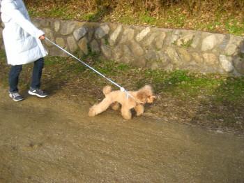ハリーの散歩