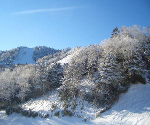 CIMG7624雪の木と遠くのゲレンデ.JPG