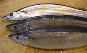 CIMG4620.秋刀魚3JPG.JPG