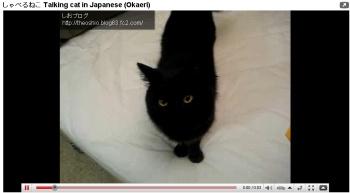 しゃべる猫.jpg