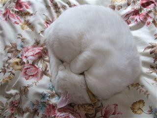 ゆき猫の猫鍋風