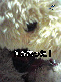 Image097~02.jpg