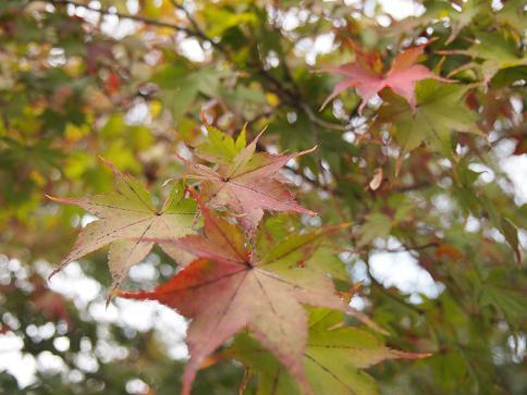 2011年11月 永観堂のもみじ.JPG