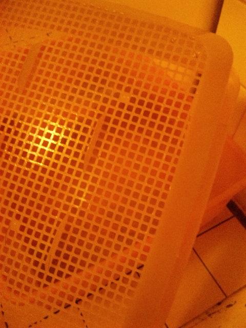 小鈴トイレ 2.jpg