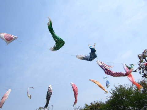 2011_0611 4月末 三鷹の鯉のぼり1.jpg