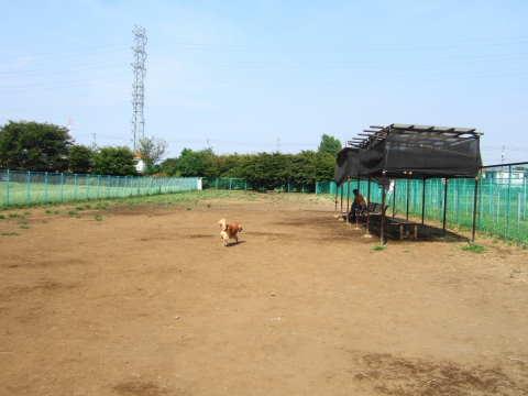 2010_0921神代植物公園ドッグラン1.jpg