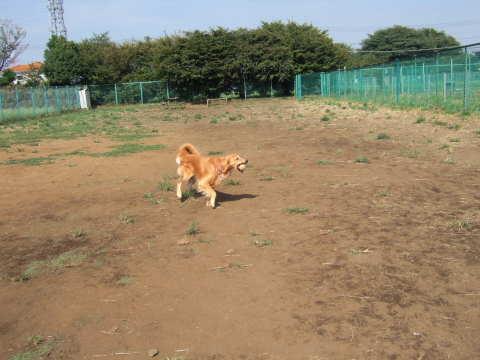 2010_0921神代植物公園ドッグラン2.jpg