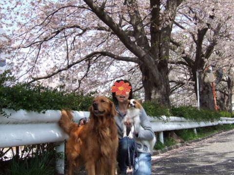2011_0419りゅう (2006.4.4)桜の下で.jpg