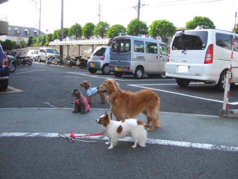 2011_0521清風園1.jpg