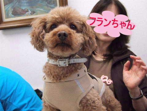 2010_0418-6訪問活動フランちゃん.jpg