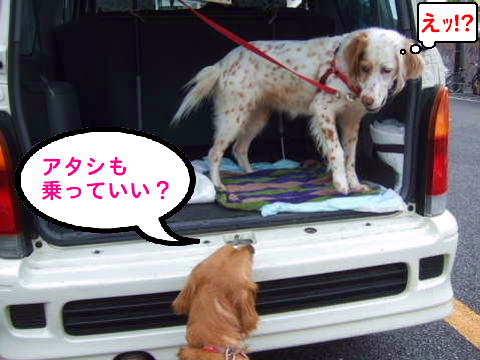 2010_0418-8訪問活動レモンちゃん.jpg